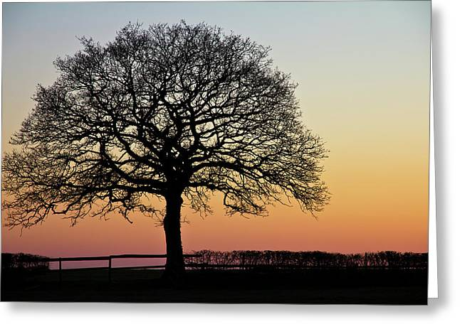 Greeting Card featuring the photograph Sunset Silhouette by Clare Bambers