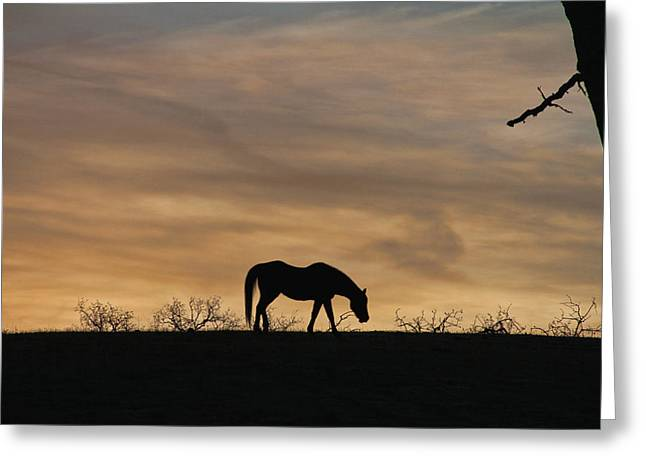 Sunset Silhouette Greeting Card by Stephanie Laird