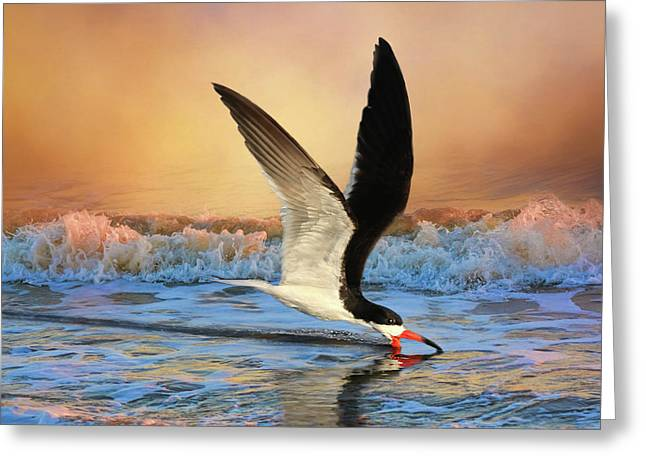 Sunset Skimming Greeting Card