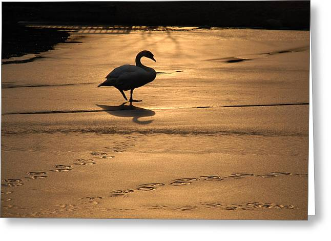 Greeting Card featuring the photograph Sunset Swan by Richard Bryce and Family