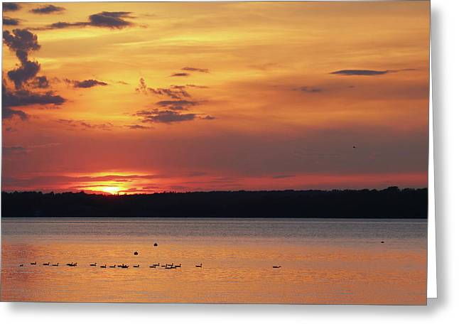 Sunset Swim Greeting Card by Lori Deiter