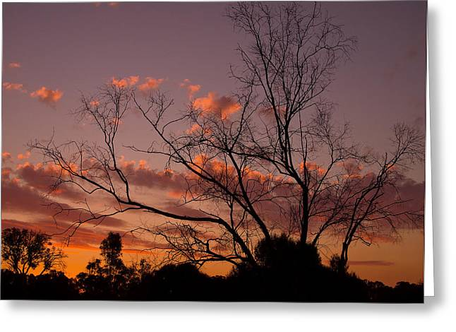 Sunset Through Filagree Greeting Card by Heather Thorning