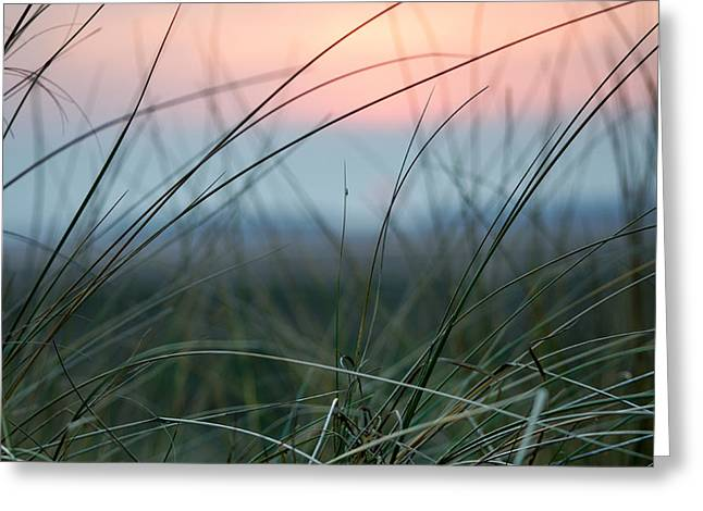 Sunset  Through The Marsh Grass Greeting Card