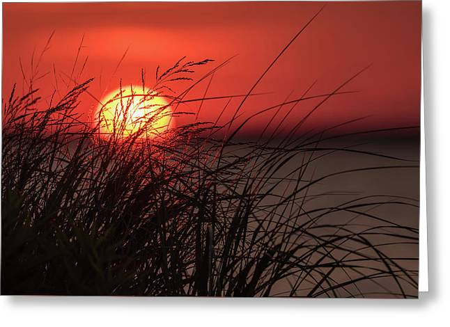 Sunset Through The Reeds Lavallette Nj Greeting Card