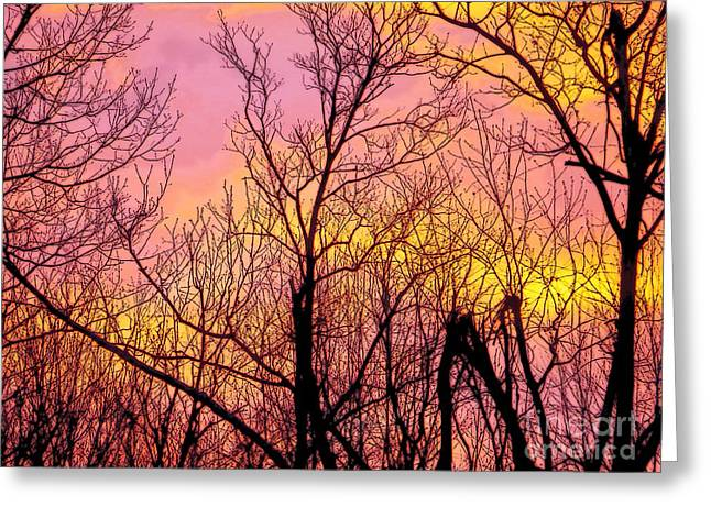 Sunset Through The Trees Greeting Card by Craig Walters