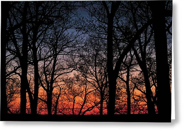 Greeting Card featuring the photograph Sunset Through The Trees by Mark Dodd