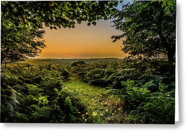 Greeting Card featuring the photograph Sunset Through Trees by Nick Bywater