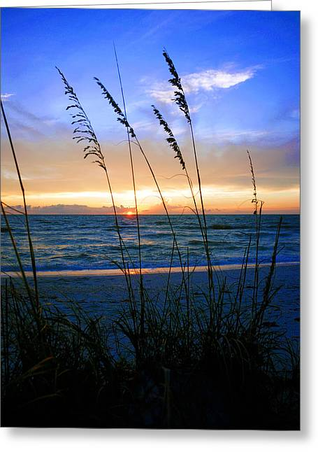 Sunset Thru The Sea Oats At Delnor Wiggins Greeting Card