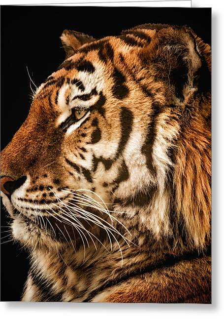 Sunset Tiger Greeting Card by Chris Boulton