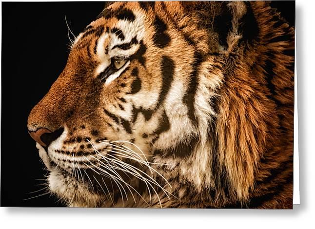 Sunset Tiger Greeting Card