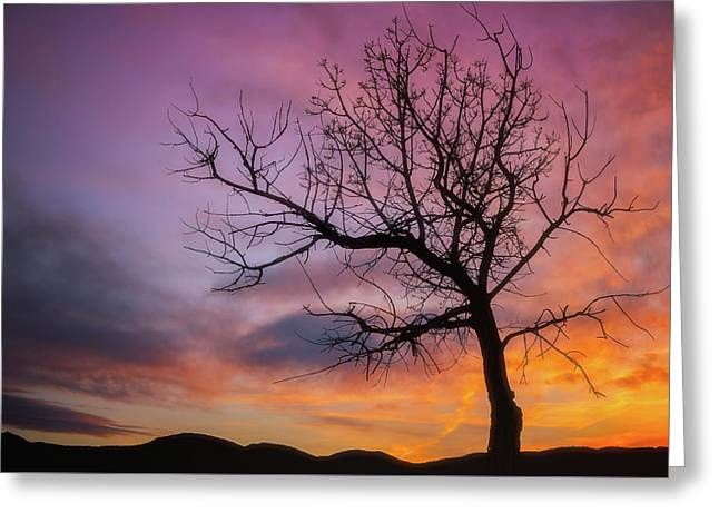 Sunset Tree Greeting Card by Darren White