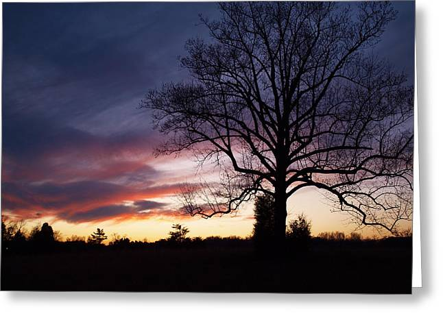 Sunset Tree Greeting Card by Michael Edwards