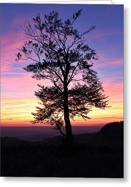 Sunset Tree Greeting Card by RKAB Works