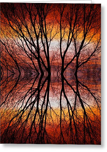 Sunset Tree Silhouette Abstract 2 Greeting Card by James BO  Insogna
