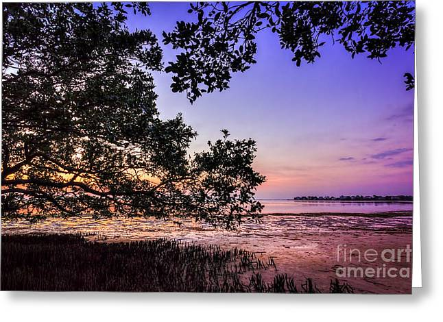 Sunset Under The Mangroves Greeting Card