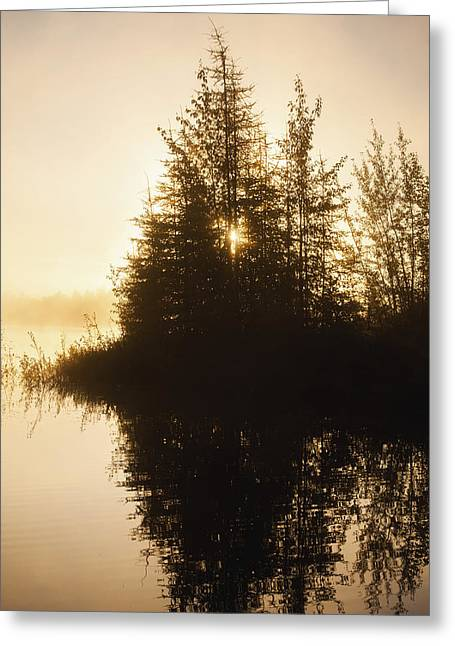Sunset View Of Trees Reflected In Chena Greeting Card