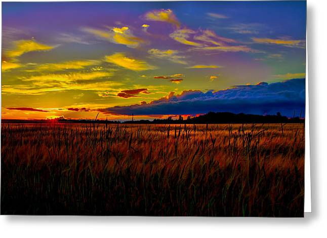 Greeting Card featuring the photograph Sunset Wheat by Gary Smith