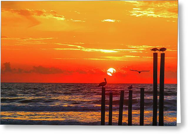 Sunset  Greeting Card by William Randolph