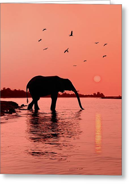 Region Greeting Cards - Sunset with Elephant Greeting Card by Christian Heeb