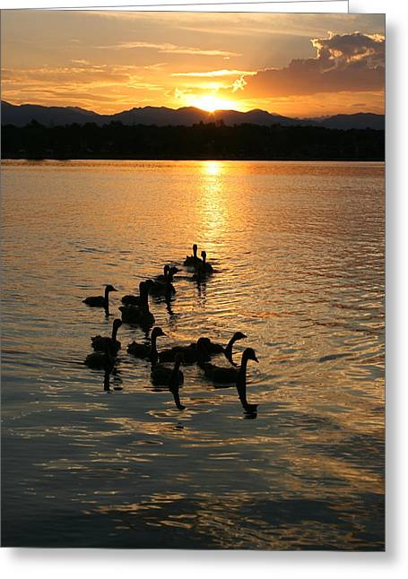 Sunset With Geese Greeting Card by Angie Wingerd