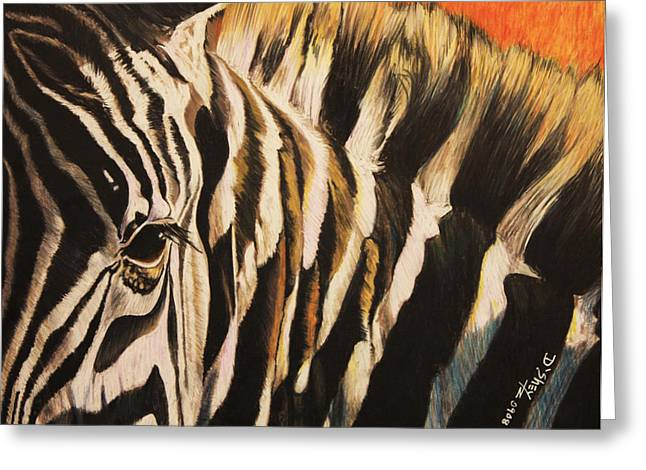 Sunset Zebra Greeting Card by Don MacCarthy
