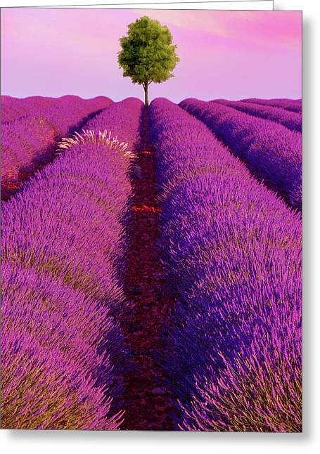 Sunsets Are Purple Greeting Card