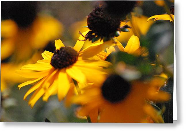 Sunshine And Daisies Greeting Card by Trudi Southerland