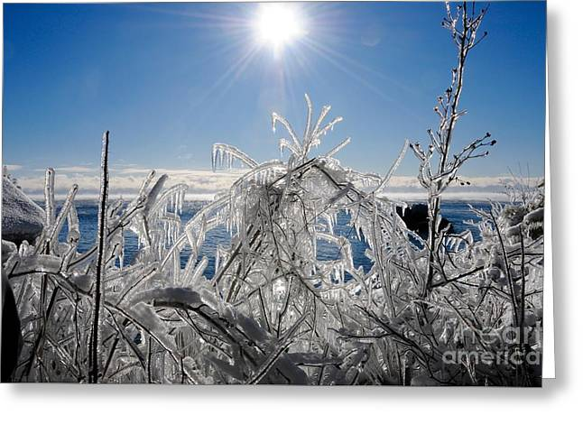 Sunshine And Ice Greeting Card by Sandra Updyke