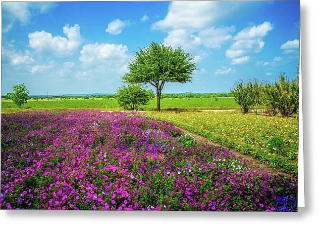 Sunshine And Wildflowers Greeting Card