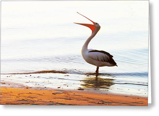 Sunshine Coast Pelican Greeting Card