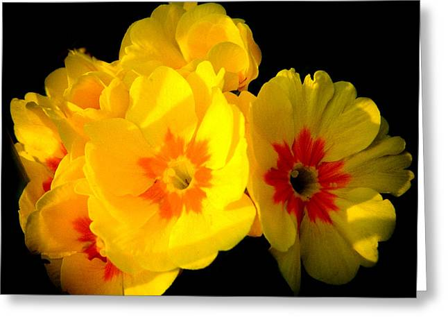 Sunshine English Garden Yellow Marigold Flowers In Bloom Greeting Card by Andy Smy
