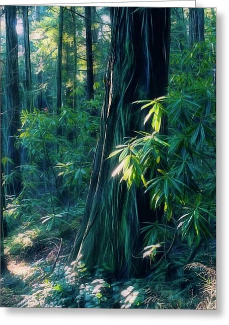 Sunshine In The Forest Greeting Card