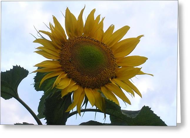 Sunshine In The Sky Greeting Card by Jeanette Oberholtzer
