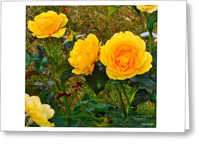 Greeting Card featuring the photograph Sunshine by Karo Evans