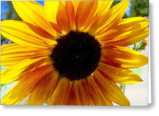 Sunshine Sunflower Greeting Card by Russell Keating