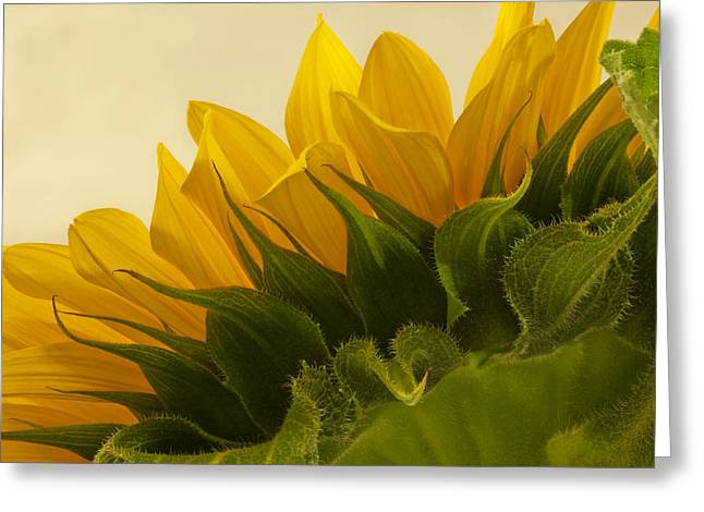 Sunshine Under The Petals Greeting Card