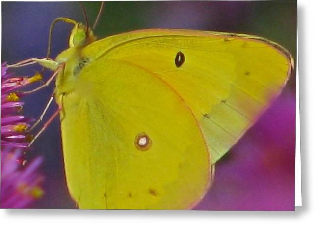 Sunshine Wings Greeting Card