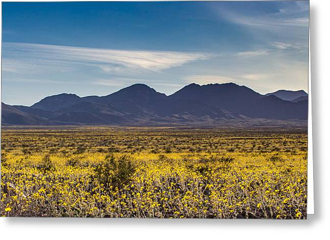 Super Bloom Death Valley  Greeting Card