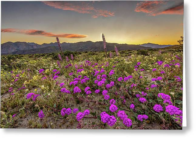 Super Bloom Sunset Greeting Card by Peter Tellone