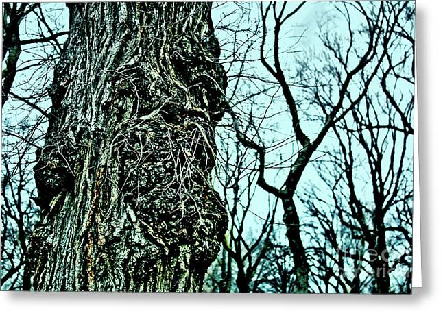 Greeting Card featuring the photograph Super Tree by Sandy Moulder