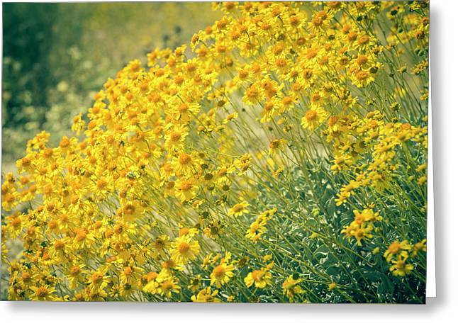 Superbloom Golden Yellow Greeting Card by Amyn Nasser