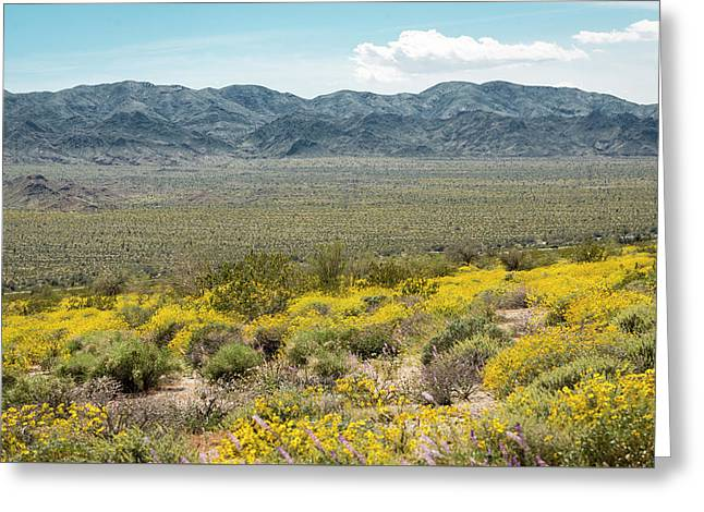 Superbloom Paradise Greeting Card by Amyn Nasser