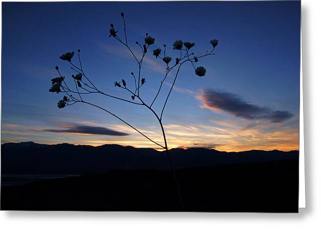Superbloom Sunset In Death Valley 101 Greeting Card by Daniel Woodrum