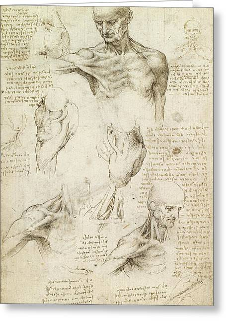 Superficial Anatomy Of The Shoulder And Neck, Recto Greeting Card by Leonardo da Vinci