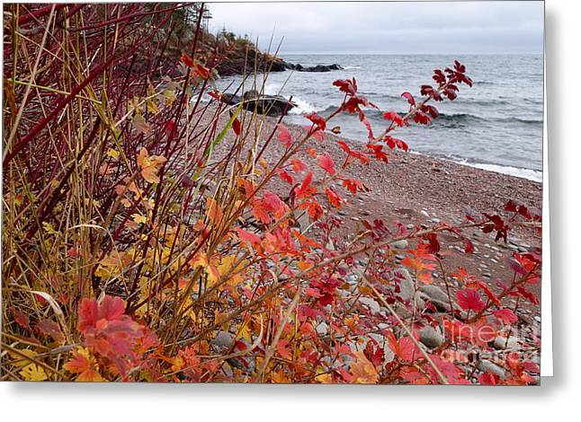 Superior November Color Greeting Card by Sandra Updyke