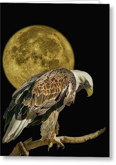 Supermoon - Bald Eagle Greeting Card by Nikolyn McDonald