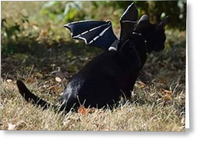 Supposedly The #jerseydevil Was Spotted Greeting Card