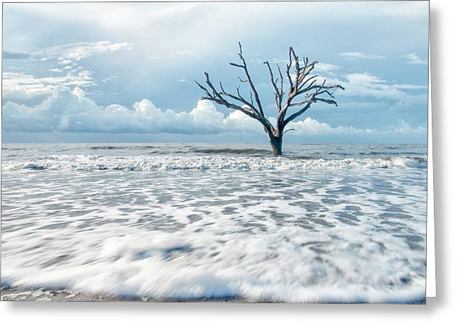 Surfside Tree Greeting Card