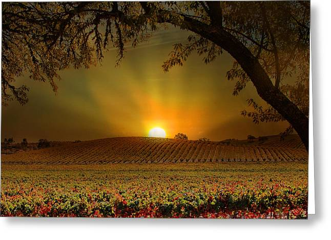 Surise Vineyard Greeting Card by Stephanie Laird