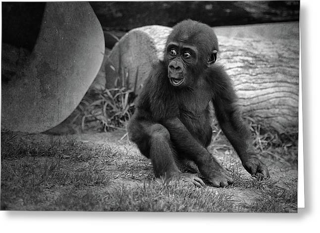 Monkey Greeting Cards - Surprise Greeting Card by Larry Marshall